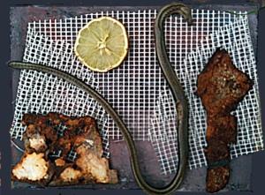 Collage mit Gitter, Rost, Schlange und Zitronensonne, 25,3,2013