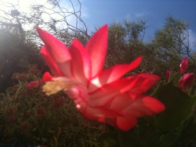 kleiner Kaktus vor Himmel