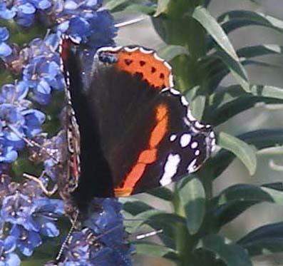 Schmetterling 2 copy