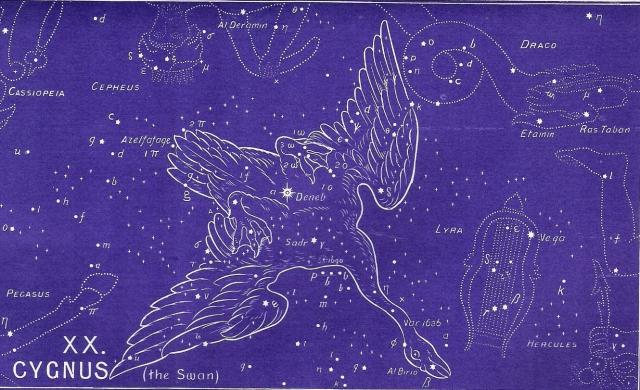 37-cygnus