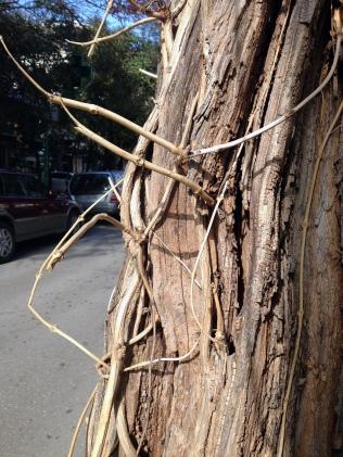 kümmerlicher Straßenbaum