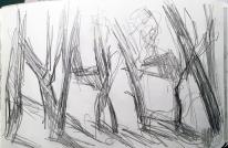 Baumstämme im Gegenlicht