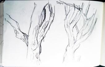 Stämme von Mandelbäumen