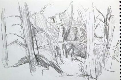 Helle und dunkle Stämme (Pinien)