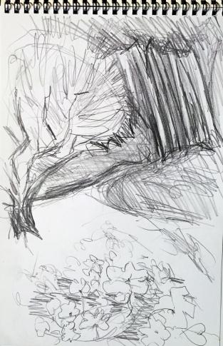 Wiese mit Frauenmantel und Ölbaum vor Kiefernwald