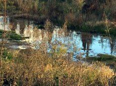 Spiegelung der Zypressen in einer Pfütze