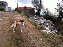 Im Taygetos-Dorf