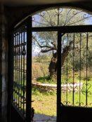 Atelier, Tür mit Olivenbaum