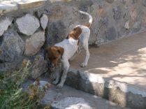 Junghund im Garten