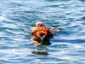 Tito schwimmt allein