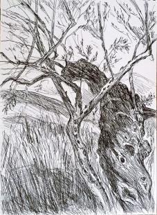 IMG_7942 Olivenbaum-2019-05-10-web