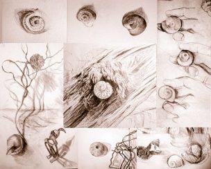Collage von Muschel- und Schneckenhäuser-Zeichnungen