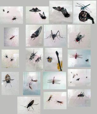 Collage von chinesischen Tuschezeichnungen, die ich fotografierte