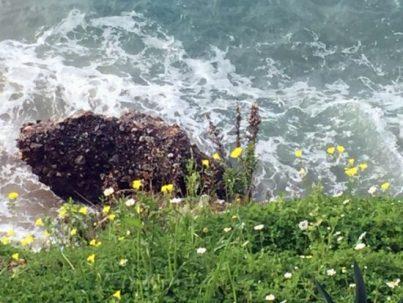 Stein im Meer, herangezoomt